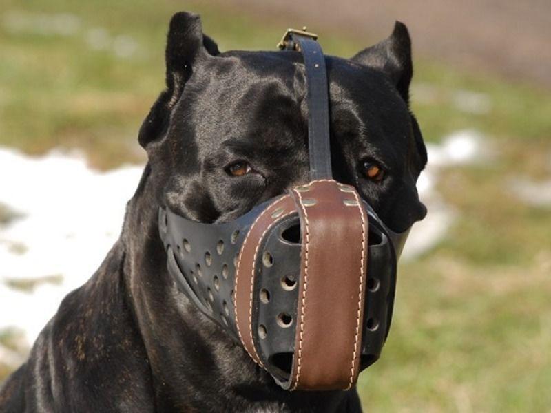ᐉ намордники для собак: какие бывают и как выбрать - ➡ motildazoo.ru