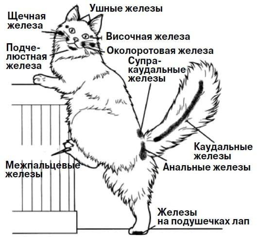 Инструкция: как гладить кошку, чтобы ей понравилось