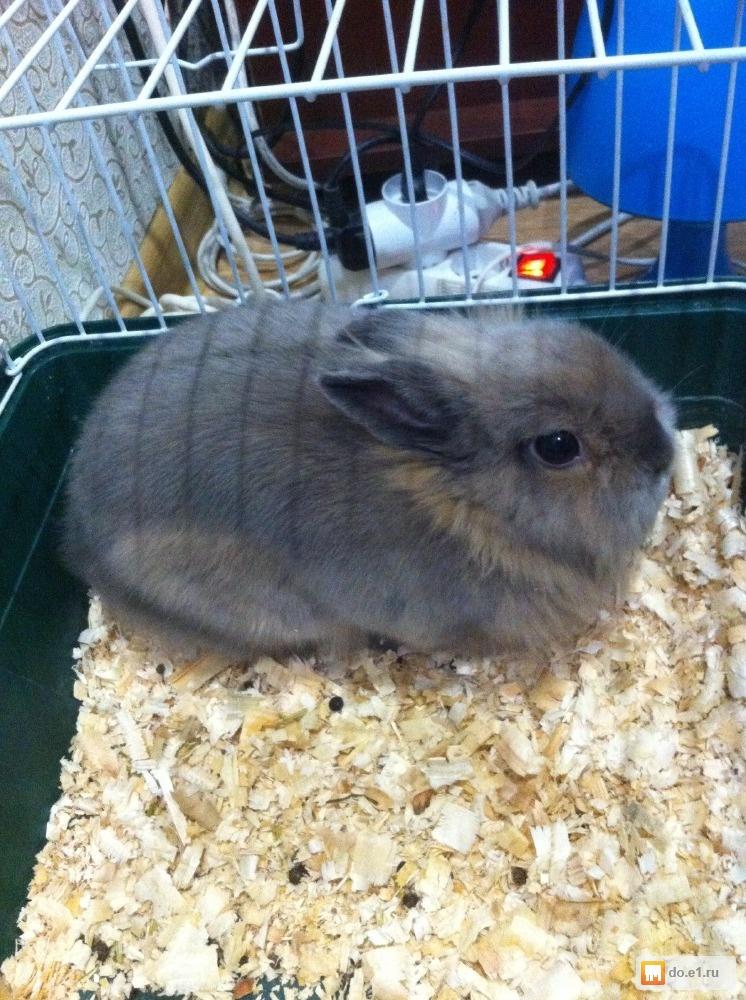 Где лучше всего покупать карликового кролика?