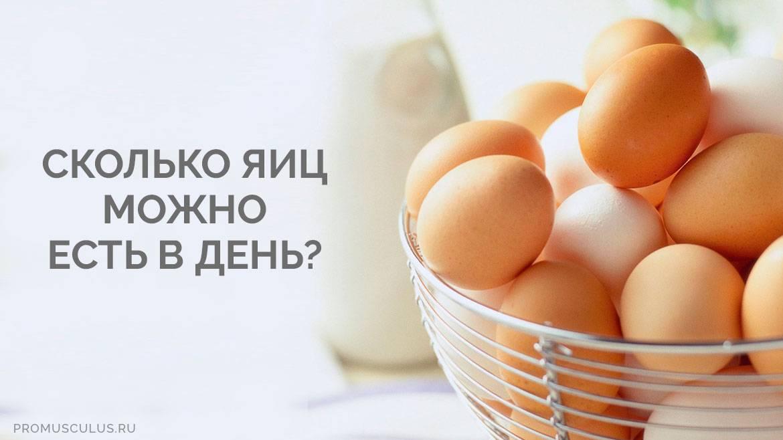 Можно ли собаке давать яйца (сырые, вареные) | «дай лапу»