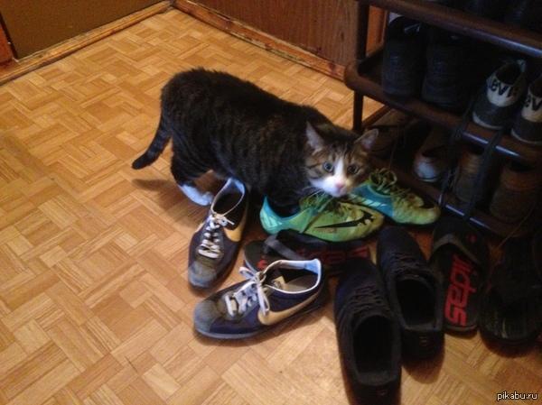 Как приучить кота к унитазу после лотка: инструкция приучения к туалету взрослой кошки и котенка