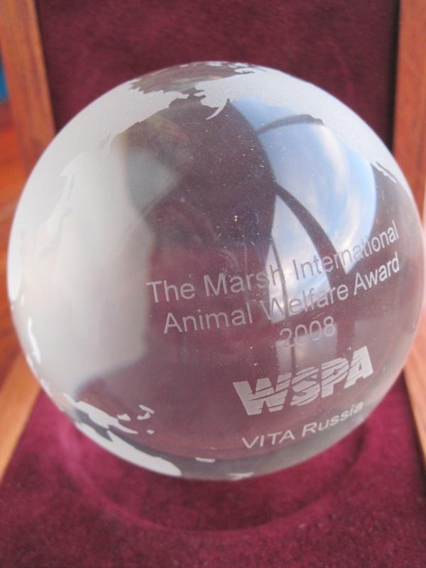 International cat care cat welfare award