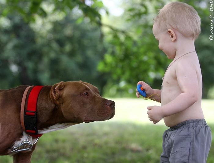 Как дрессировать собаку: советы, правила, методы