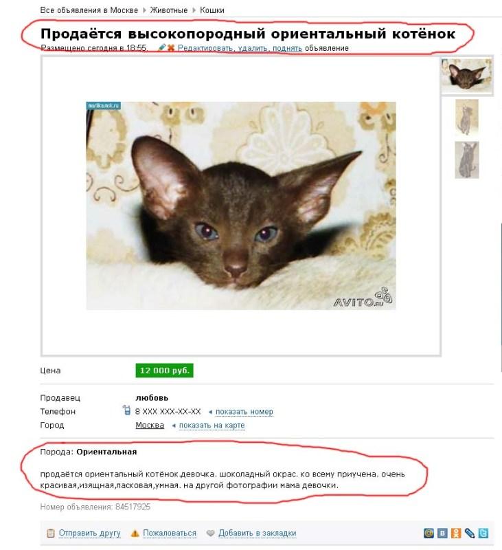 Заводчик или питомник? как купить здорового котёнка.