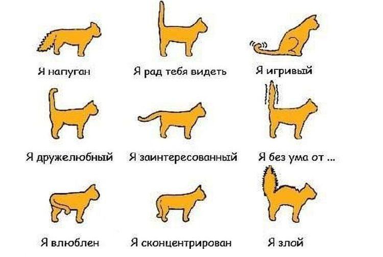Кожные болезни кошек - симптомы и лечение