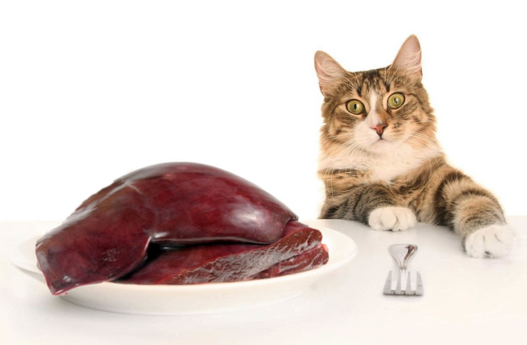 Сырое мясо кошкам