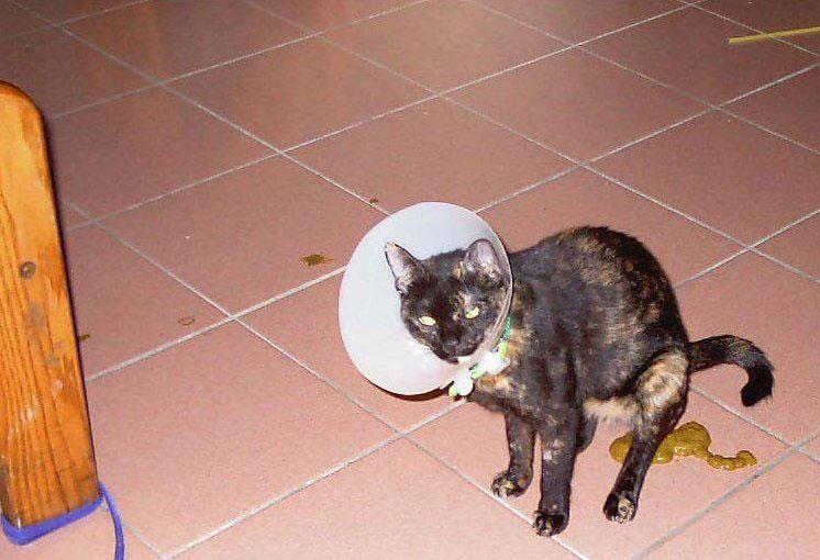 Как наказать кошку, можно ли и как правильно это делать, чтобы кот понял (за плохое поведение, за то, что гадит, кусается) - блог о животных - zoo-pet.ru