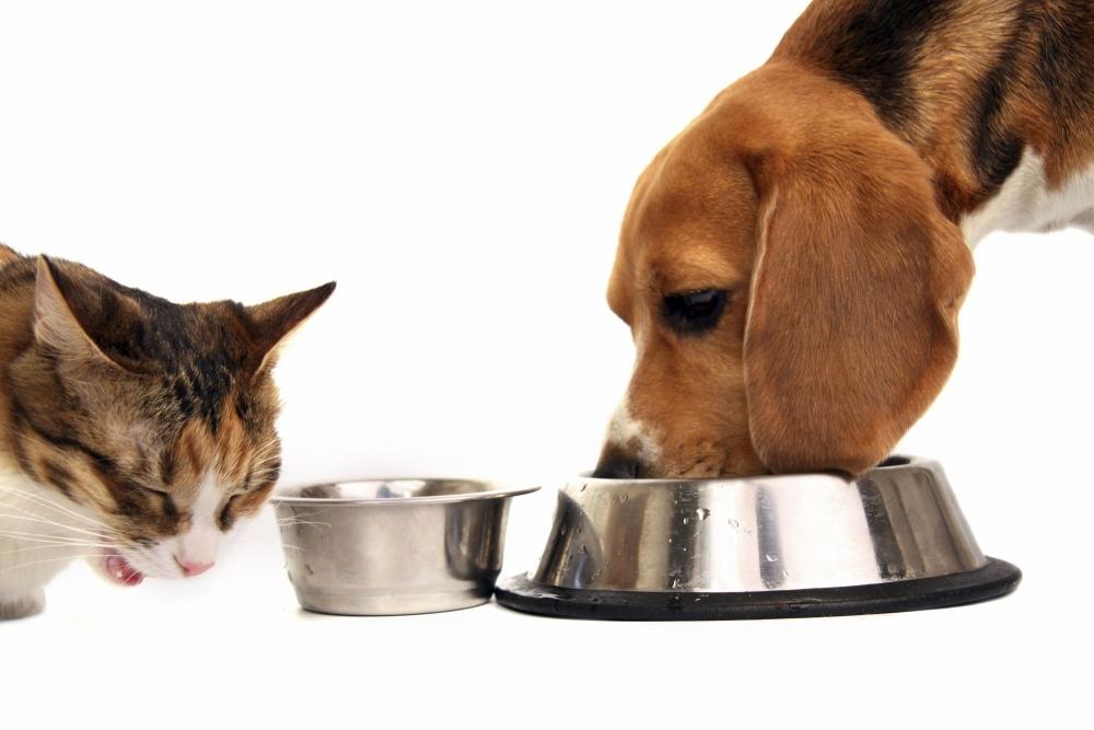 Можно ли кошкам собачий корм: да, нет, и почему - петобзор