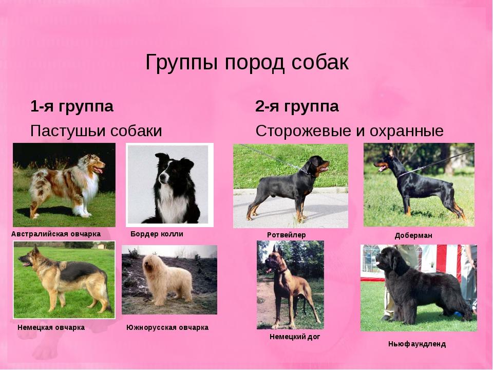 Служебные собаки: описание, породы и содержание
