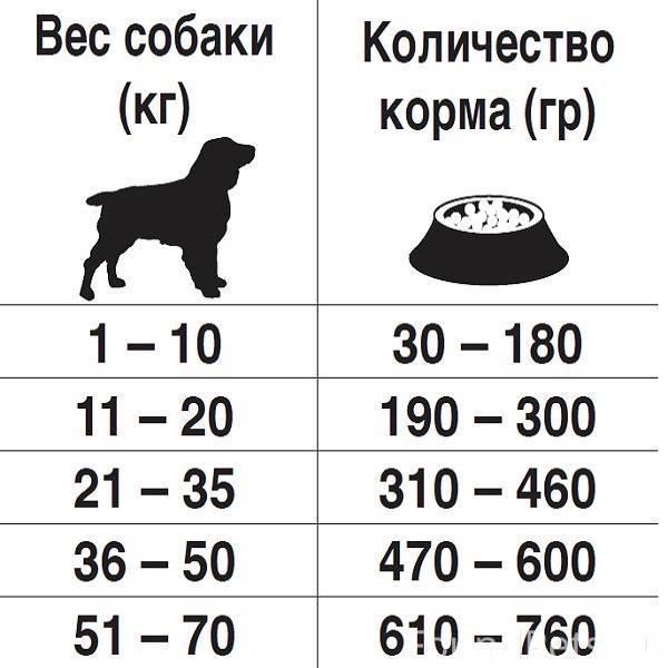 Чем кормить немецкую овчарку - что едят взрослая собака и щенок немца, норма еды в день