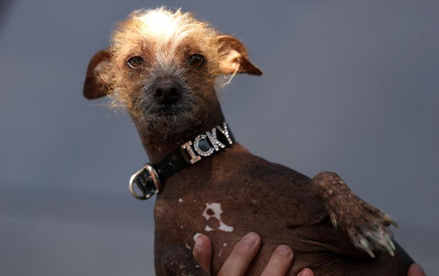 ᐉ самые глупые породы собак - топ 10 с фото - zoovet24.ru