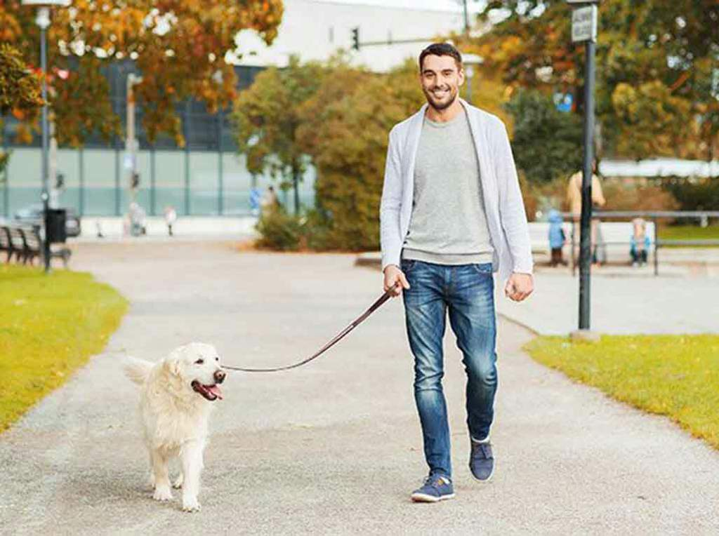 Сколько раз в день нужно выгуливать собаку: до еды или после