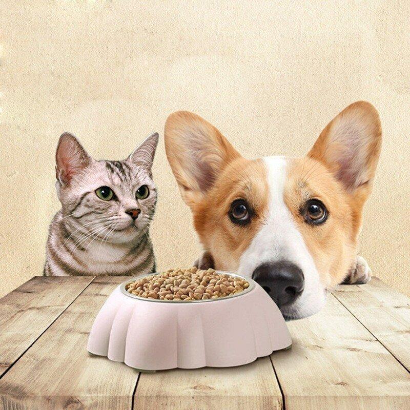 «не следуйте инструкциям по кормлению на упаковке»: ветеринары раскрыли 9 самых больших ошибок, которые люди делают при кормлении своих питомцев