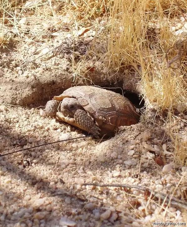 Спячка черепах, как зимуют черепахи