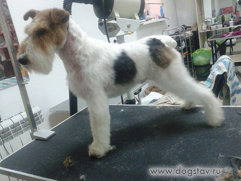 Причины тусклой шерсти у собаки – что делать, если у собаки тусклая шерсть | royal groom