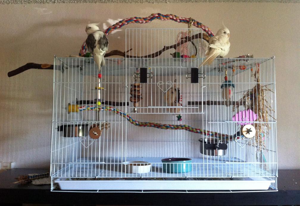 Райское место для птички: выбор клетки для волнистых попугаев