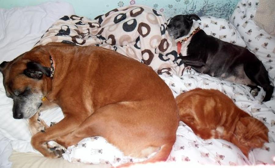 Собака спит на кровати: польза или вред