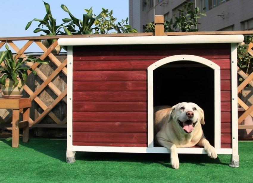 Будка для собаки своими руками: чертежи и схемы, домашняя и уличная, утепление