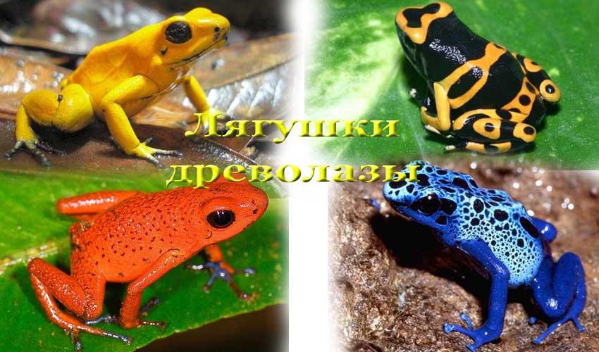 Самые красивые лягушки в мире (30 редких фото)   krasota.ru