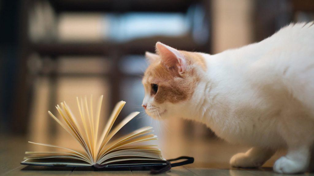 ᐉ какая порода кошек самая умная и преданная? - zoomanji.ru