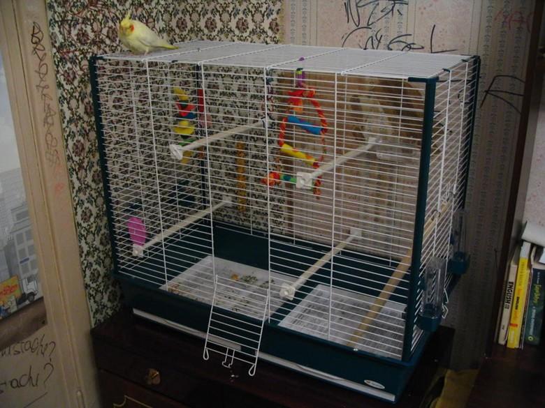 Как правильно подобрать клетку для волнистого попугая