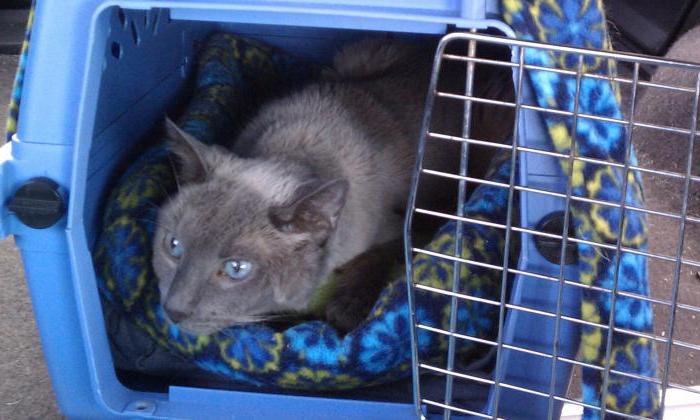 Как поймать кота на улице на валерьянку