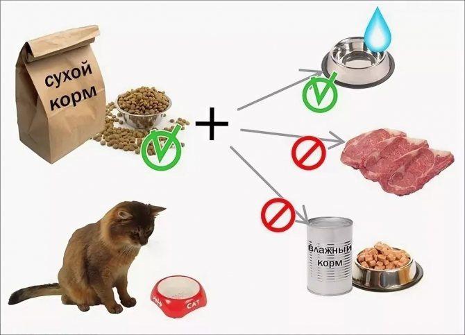 Натуральный корм для кошек: домашние рецепты, принципы и особенности питания животного, как правильно кормить натуралкой
