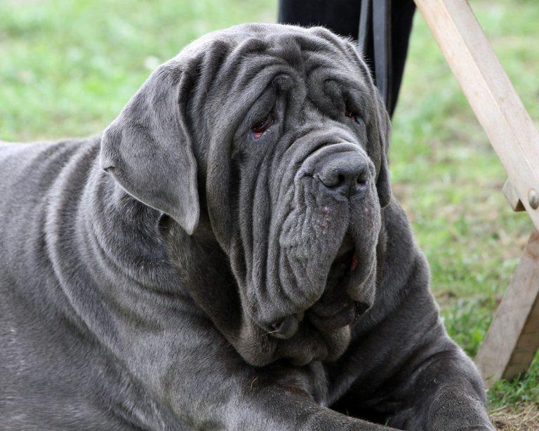 Полный список размеров собак: от гигантских до самых маленьких
