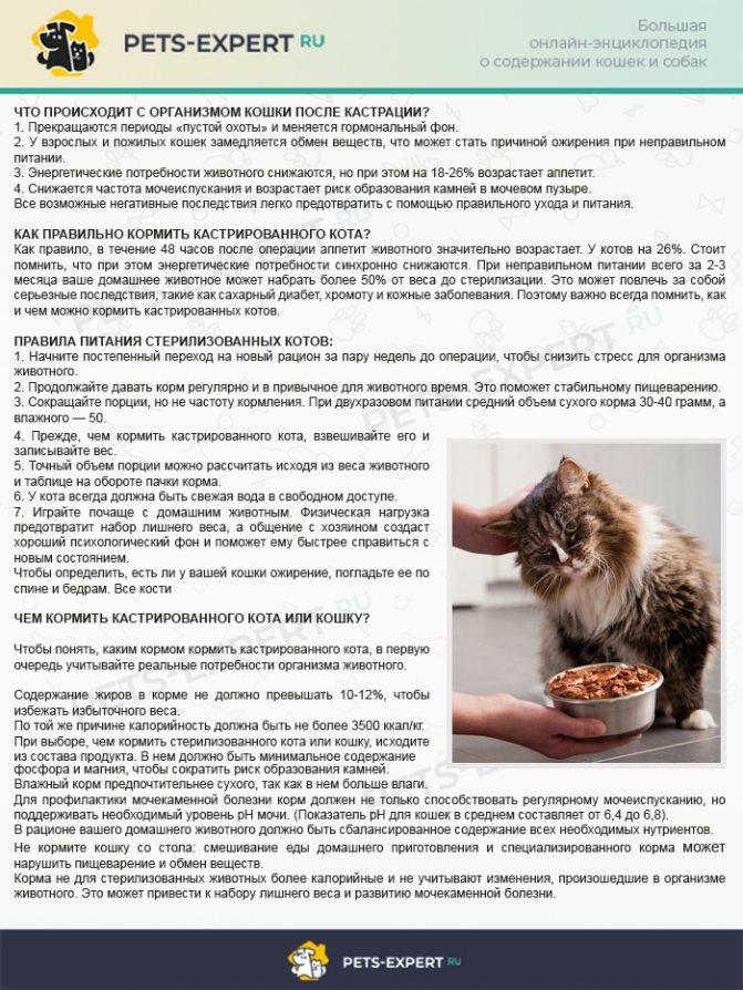 Заболевание пищеварительной системы у кошек