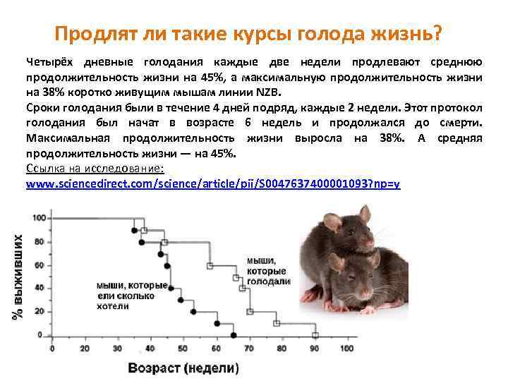 Сколько живут хомяки, как увеличить продолжительность жизни