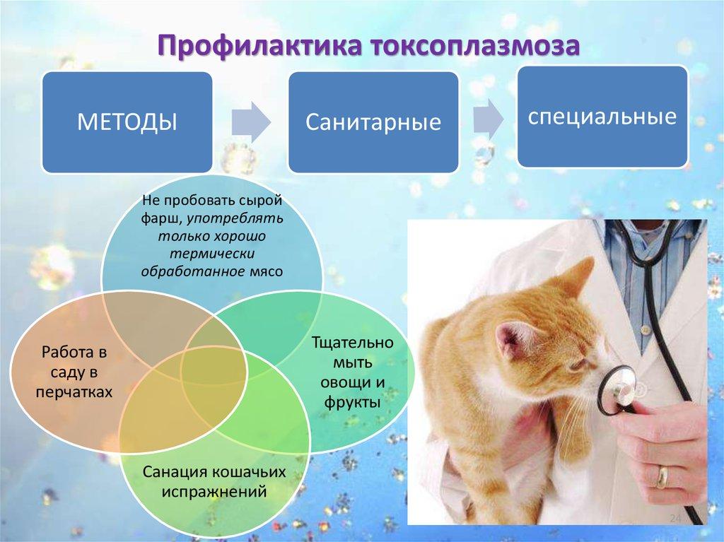 Токсоплазмоз у кошек - симптомы и лечение