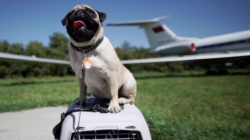 Где можно оставить собаку на время отпуска