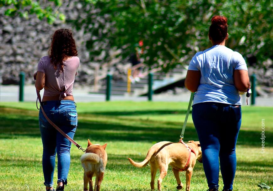 Как выгуливать собаку правильно и сколько раз - сколько нужно гулять с собакой и как часто - лапы и хвост
