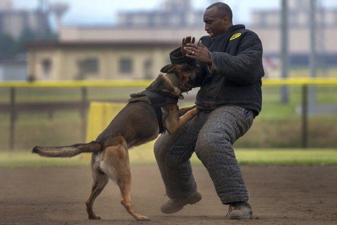 Сила сжатия челюстей собак таблица по породам. самые сильные челюсти животного мира. бойцовские собаки: сильные по-иному