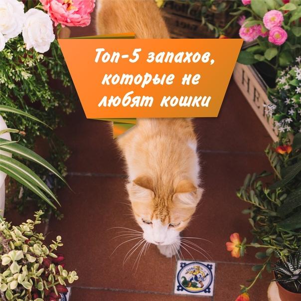 Эксперт назвал 6 запахов, которые ненавидят кошки: новости, животные, кошка, запах, кошки, животное, эксперты, домашние животные