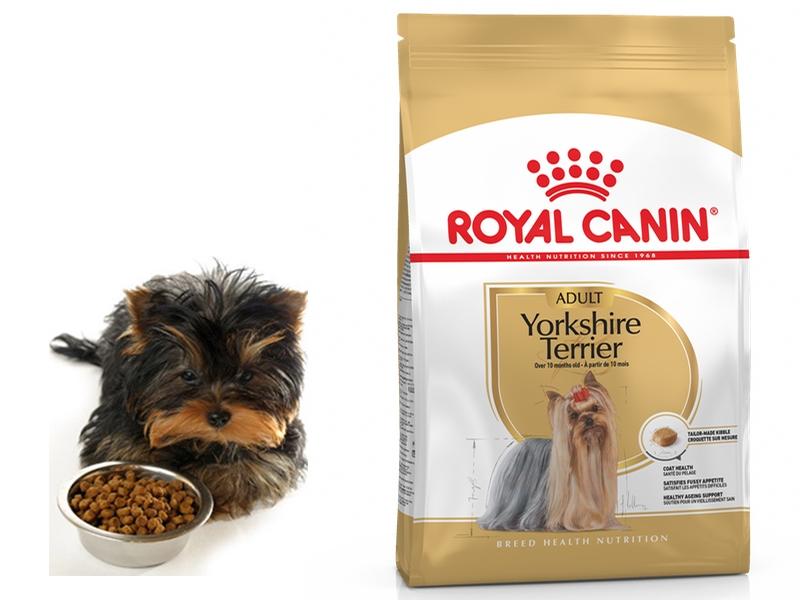 Как и чем кормить щенка йоркширского терьера: меню по возрастам