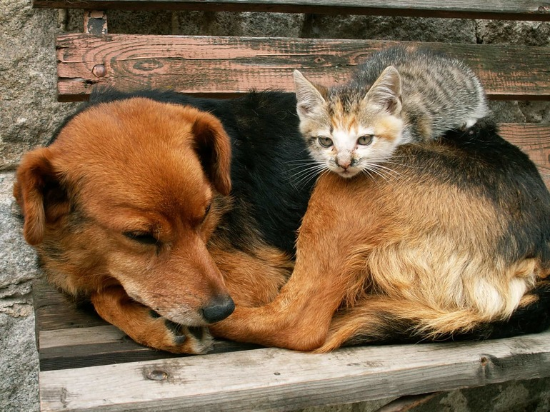 Как подружить кота с собакой (с иллюстрациями)