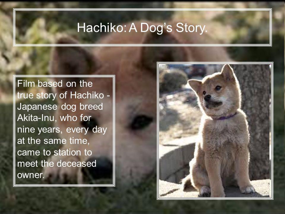 ᐉ порода собаки из фильма хатико: реальная история и отражение её в культуре - zoovet24.ru