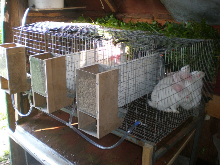 Разведение кроликов в домашних условиях: содержание, выращивание и размножение