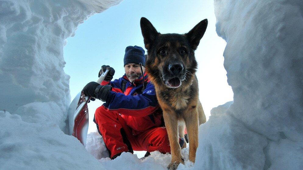 Породы собак-спасателей: спасатели в экстренных службах, на воде, в горах, подготовка собак с спасательной службе