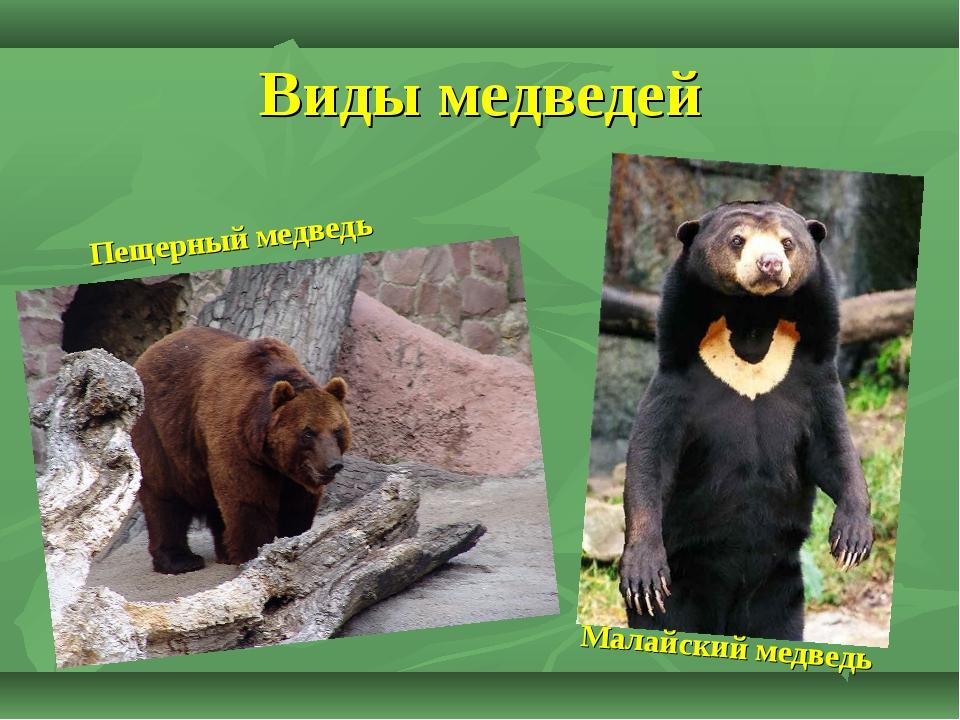 Самые красивые медведи + 20 фото