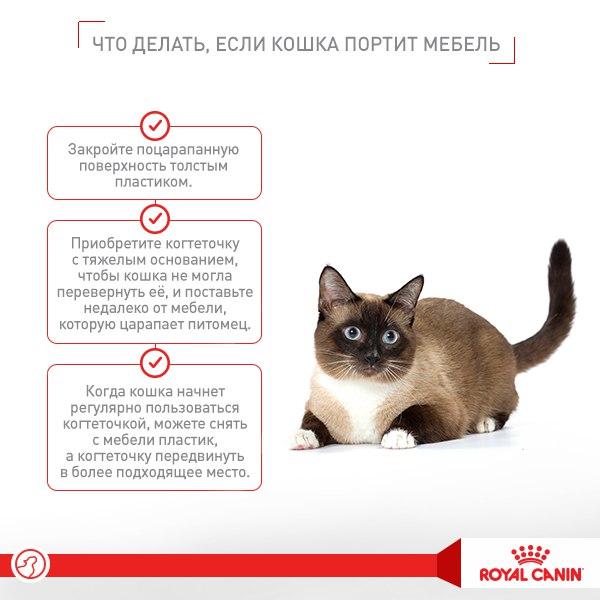 Причина по которой ваша кошка часто сбрасывает вещи, и как с этим бороться