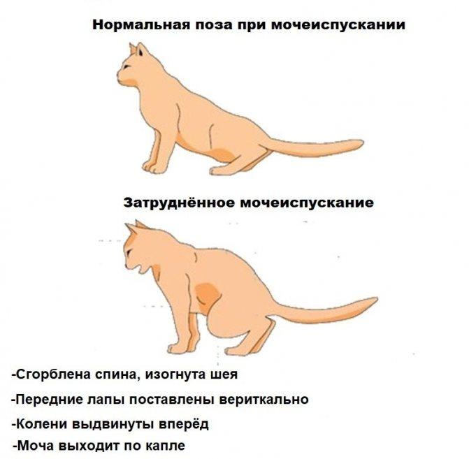 Как спасти кота от жары?