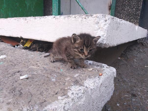 Куда девать котят от кошки – куда пристроить котенка?