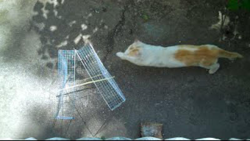 Как поймать кошку на улице или дома? совет эксперта
