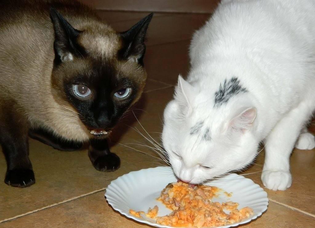 Две кошки в одном доме — ребята, давайте жить дружно