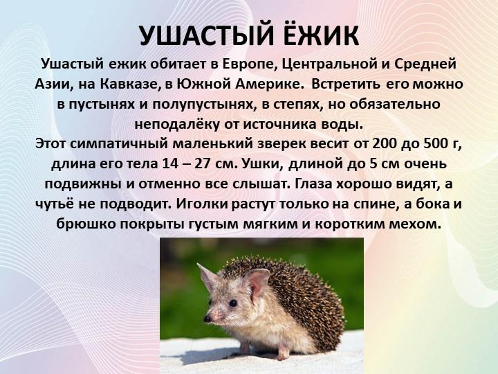 Ёж животное. описание, особенности, виды, образ жизни и среда обитания ежа   живность.ру