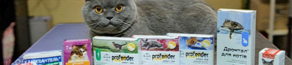 Вязка кошек: правила и советы   hill's