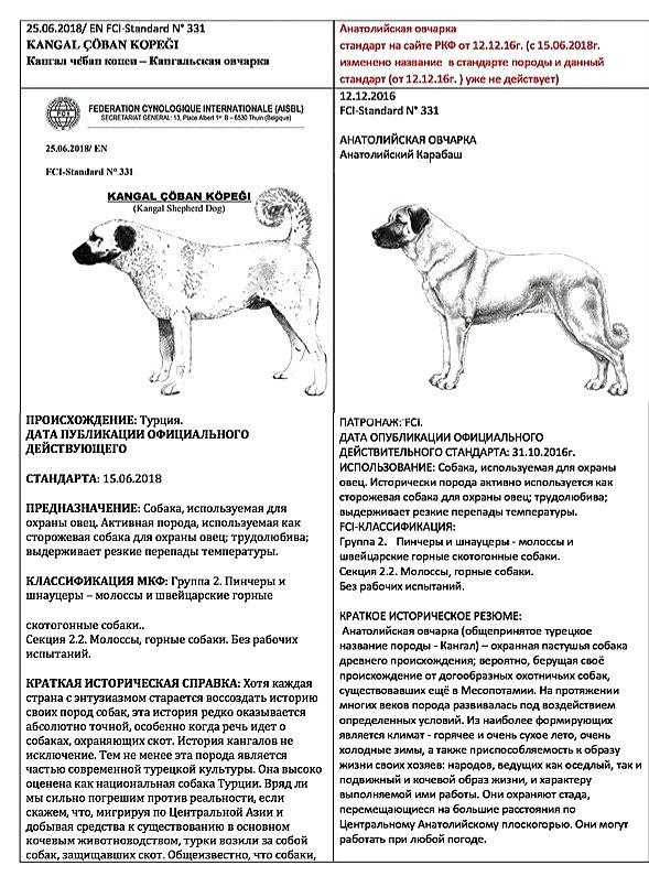 Анатолийская овчарка — бдительный сторож и защитник