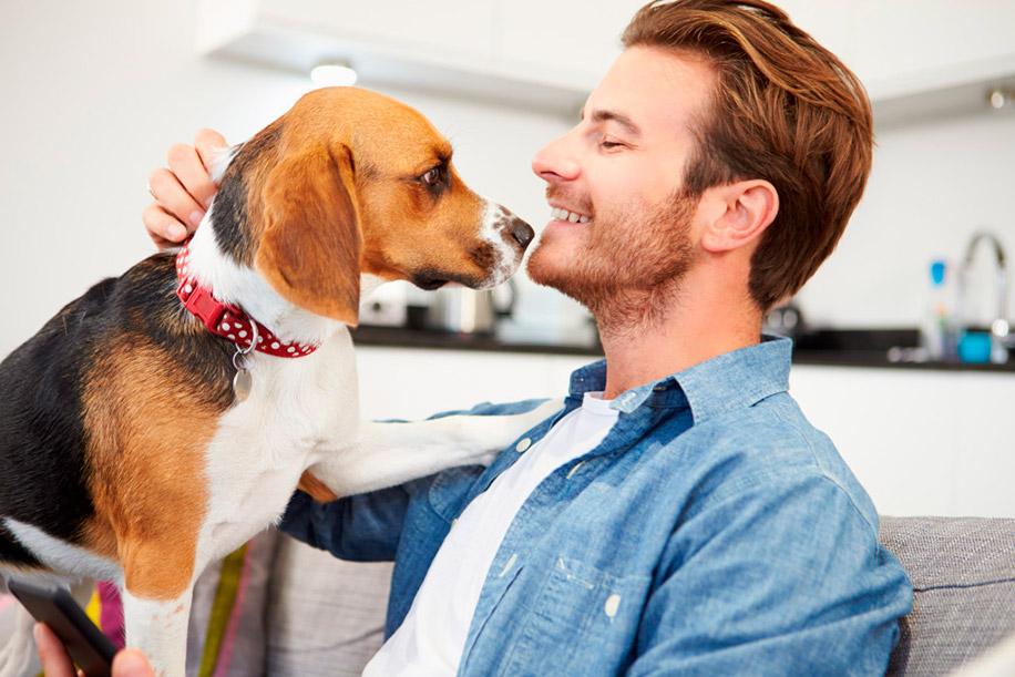 5 причин, почему собака лижет руки